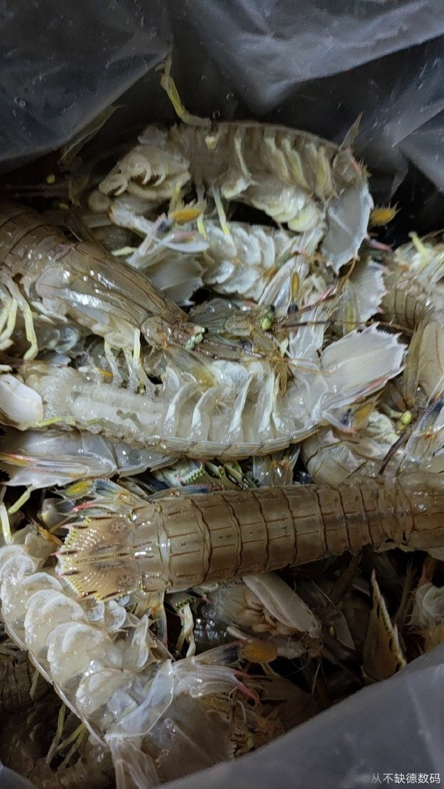 中午清蒸皮皮虾